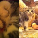 Taylor Swift-Meredith