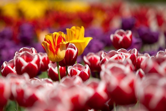 szép tavaszi idézetek A 3 legszebb idézet a tavaszról | LÁJK Magazin