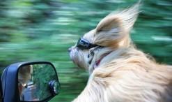 dogs-on-joyrides-19__605