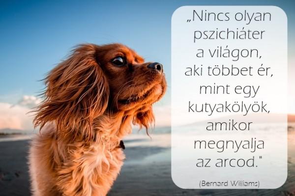 dog-2603396_640