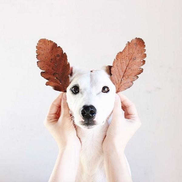 Micsoda fülek! :D
