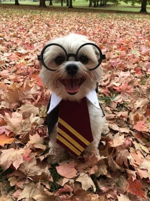 """""""Állítólag Harry Potterre hasonlítok, én meg azt sem tudom, hogy ki az."""""""