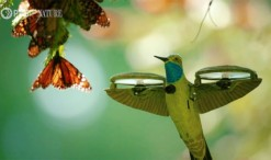 2020_05_11_kolibri